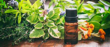 Variety of fresh herbs and oil on wooden background