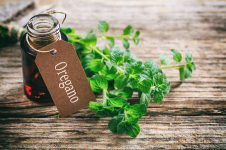 Fresh oregano twig and oil on wooden background