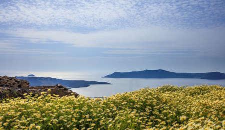 Santorini island, Greece - Yellow flowers on the background of Nea Kameni Stock Photo