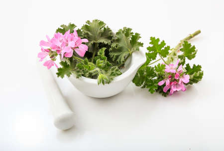 Fresh bloomed citronella in a mortar on white background