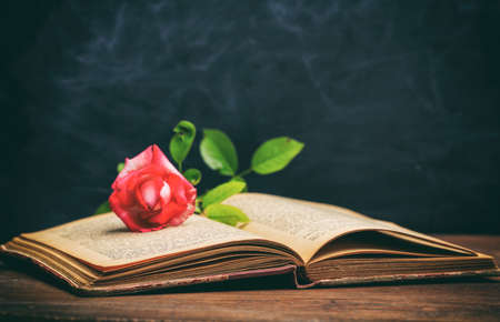 Vintage book and rose on blackboard background - copy space