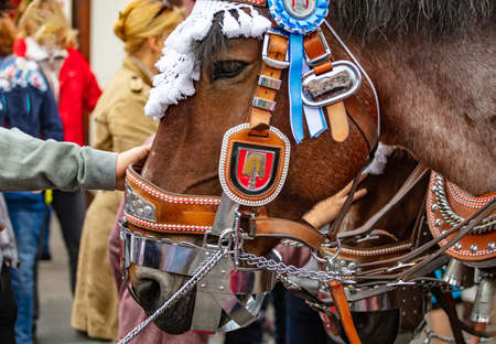 Horse decorated head closeup, Oktoberfest, Bavaria, Munich