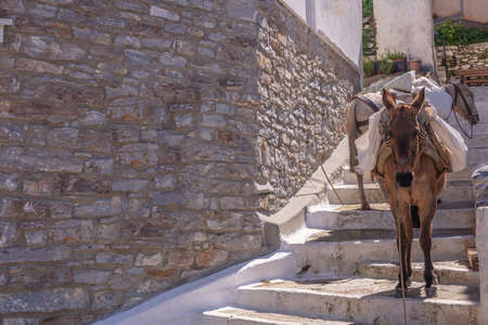 Greece, Kea island. Capital city of Ioulis narrow street with stairs and mules donkeys used for goods transport