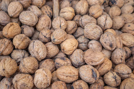 Walnuts harvest. Whole walnuts with shell background, texture. Closeup view