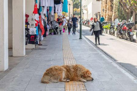 April 28, 2019. Athens, Greece. Sleeping dog. Brown abandoned animal sleeps in the middle of sidewalk. Market, people walking