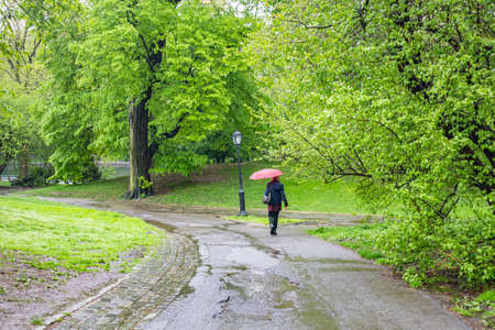 Raining in Central Park, New York city. Woman walking alone on a path holding a red color umbrella, fresh tree foliage and grass, spring day
