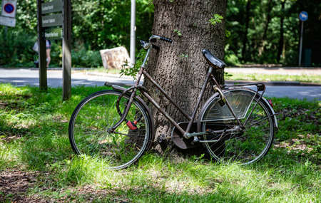 Bicycle, black color , old, vintage. Bike unlocked in a park leaned on a tree trunk, Rotterdam city, Netherlands