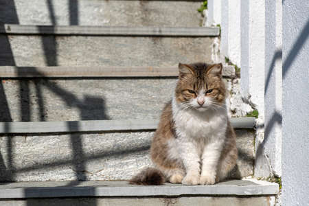 Stray cat concept. A abandoned kitty is sitting on staircase opposite the sun. The mammal that has white and brown color is alone and unhappy.