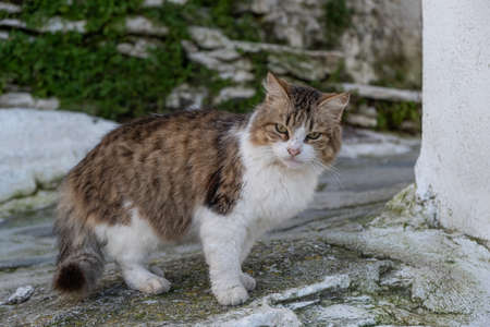 Stray cat concept. An abandoned kitty at the street standing next to a wall. It has white and brown color and looks unhappy. Zdjęcie Seryjne