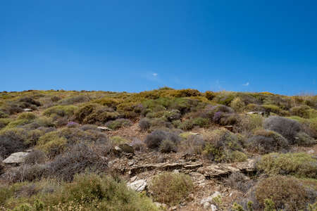 Shrubland, dry, wild nature at countryside of Tzia, Kea island. Hiking between stones and bushes, adventure in Greece, summer holidays destination. Clear blue sky background.
