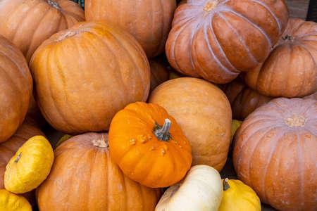 Pumpkins variety background. Thanksgiving concept. Pumpkins stacked on a farmers market stall in November Standard-Bild