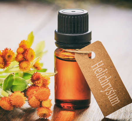 Helichrysum essential oil, fresh leaves and blossoms on wooden background. Helichrysum orientale herb, also known as everlasting and immortelle
