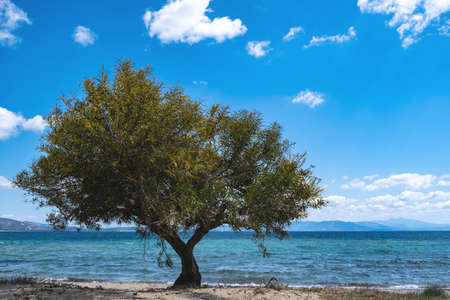 Summer destination Greece there that clear blue sky meets blue calm sea. Greek island sandy beach with shade from green tamarisk, tamarix or salt cedar tree at seaside sunny day. Horizon background.