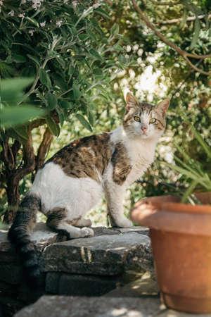 Green eyed Cat sitting in the garden