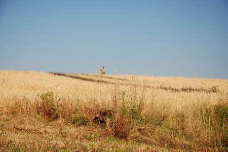 sud: LANDSCAPE VIEW IN CAMPANIA,SUD ITALIA Stock Photo