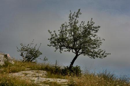Italy : View of Tubenna Mountain In Castiglione Del Genovesi,June 8,2020.