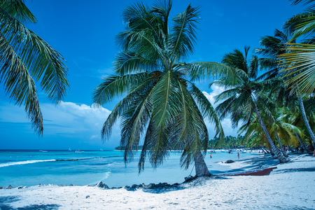 Tropical beach with white sand and palms in Saona island (Dominican Republic).