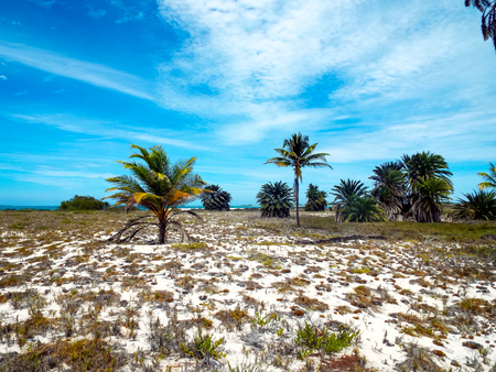Tropical landscape in Cayo de Agua (Los Roques Archipelago, Venezuela).