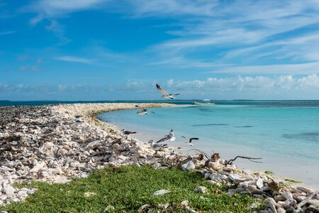 View of a group of seagulls in Cayo Nordisky (Los Roques Archipelago, Venezuela).