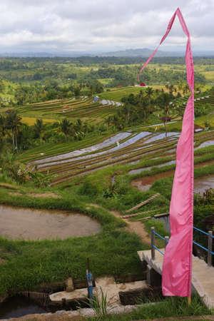 plantations: rise plantations