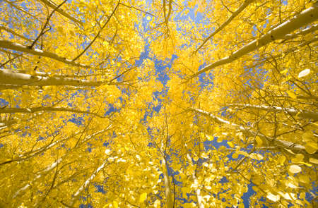 Looking skyward amongst this patch of sun-lit aspen trees, you feel a sensation of calm wash over you as a warm breeze brushes through the leaves. All is peaceful here