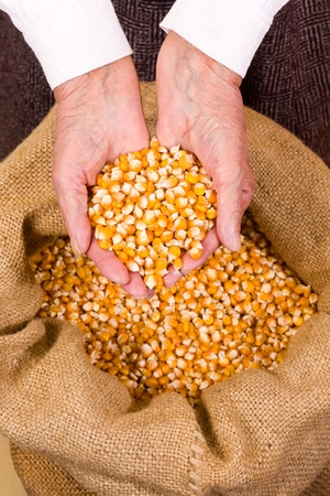 Old woman holding corn seeds in front os a sack photo