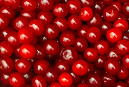 sherry: background with lots of sour cherries Stock Photo