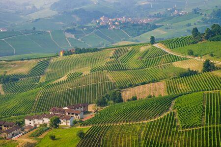 nebbiolo: Langhe vineyards