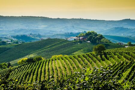 nebbiolo: Langhe hills and vineyards