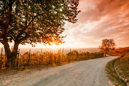 Langhe vineyards in autumn Stock Photo
