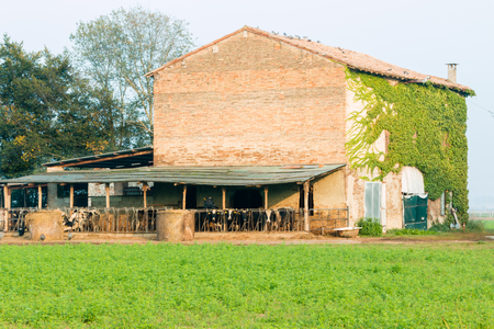 farm house with cows and round hay bales