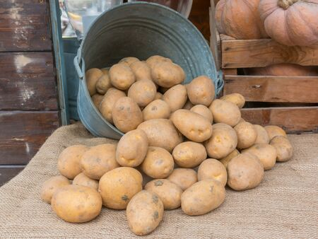 starchy food: a bunch of brown potatoes rolling out of an old iron pail over jute textile Stock Photo