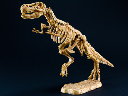 darwinism: dinosaur Tyrannosaurus T Rex statuette skeleton on black background, t-rex toy