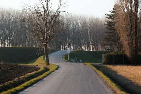 Winding road through forest, S-shape curve path photo