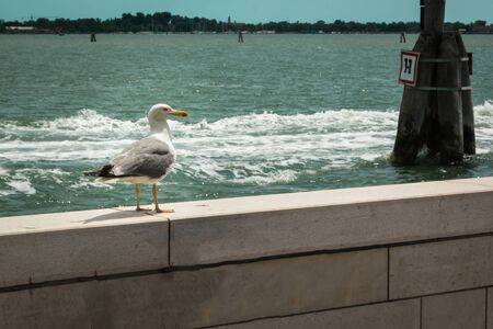 static: Static Alone Seagull on White Parapet, Sea in Background Stock Photo