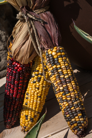 Red and Yellow Indian Corns
