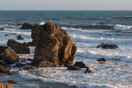 Gray Sea Bird on Cliff in front of Choppy Sea