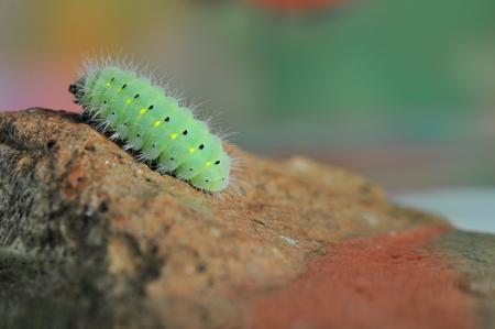 Grüne Raupe auf Stein, Makro-Thema Lizenzfreie Bilder