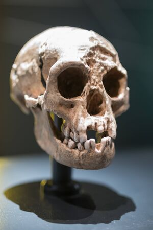 Reconstruction of a Human Skull of Prehistoric Ages.