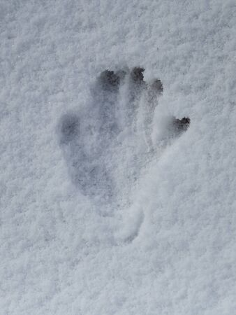 Handprint with Five fingers Deep in the Snow. Banque d'images