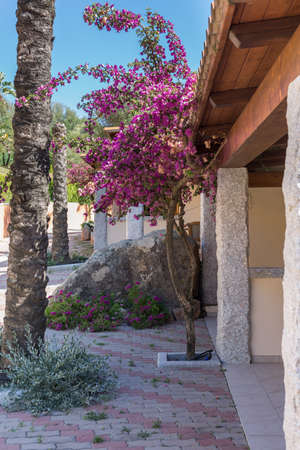 Very Nice Tree with Pink Flowers near a Stone Structure. Imagens