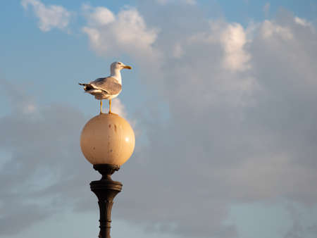 Seagull on a Round Lamp and the Sky with Clouds in the background.