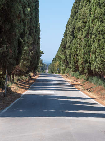 Characteristic Long Road of the Medieval Village of Bolgheri in Tuscany surrounded by Cypresses - Italy.