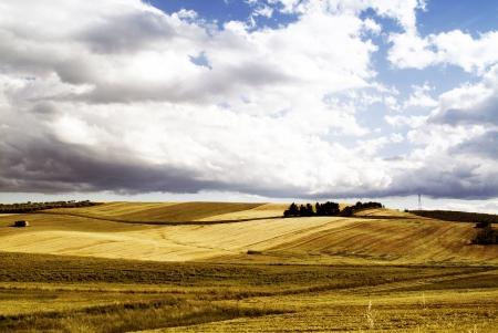 farina: Oro di Puglia