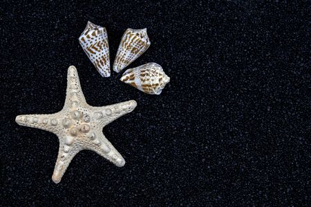 a white starfish and seashells on black sand Stock fotó