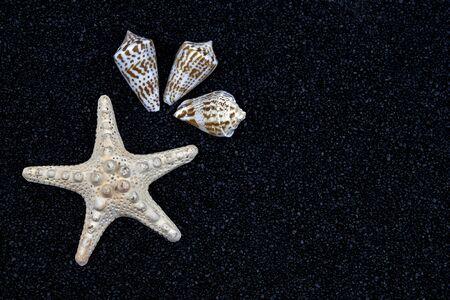 a white starfish and seashells on black sand Stock Photo