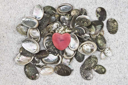 several seashells on white sand with a heart Stock Photo - 9634352