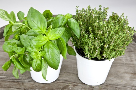 fresh basil and fresh thyme in white pots on a wooden table