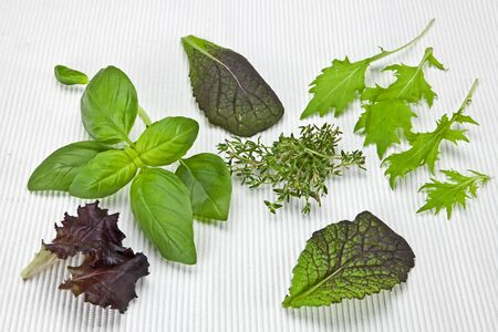 variety of lettuces and herbs on a white mat