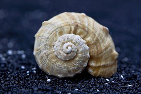 one seashell on black sand - closeup Stock Photo